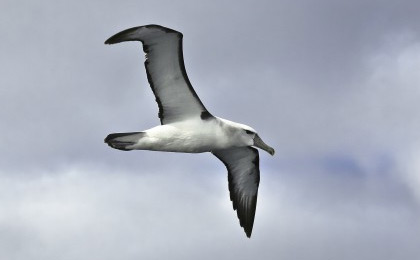 Pelagic Encounters bird watching