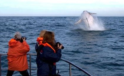Whale and bird watching in South Africa